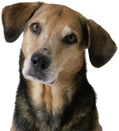 france house dog