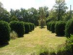 front garden june